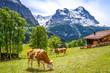 canvas print picture - Kühe, Alpen, Almhütte