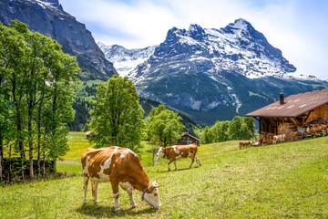 Kühe, Alpen, Almhütte