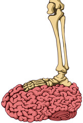 Skeleton Brain Step, Color