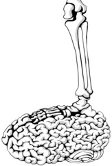 Skeleton Brain Step