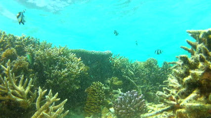 Time Lapse View Of Underwater Tropical Ocean