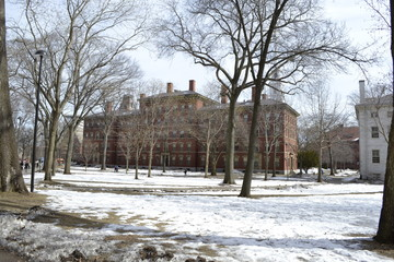 harvard in the snow
