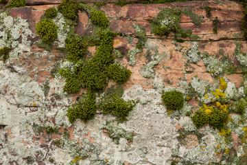 Pipestone & Moss