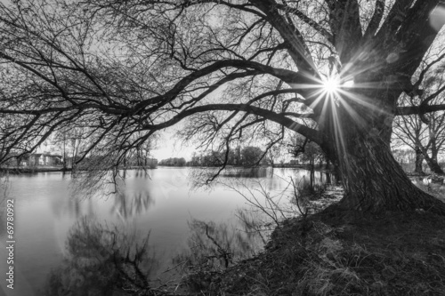 black and white tree silhouette in sunrise time