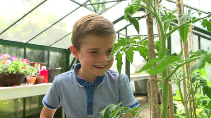 Boy Picking Home Grown Tomatoes In Greenhouse