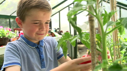 Boy Picking And Eating Home Grown Tomatoes In Greenhouse