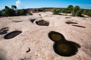 Water hole at Canyonlands