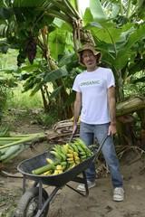 Farmer transporting bananas in plantation