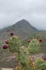 Cactus and Mountain (2)