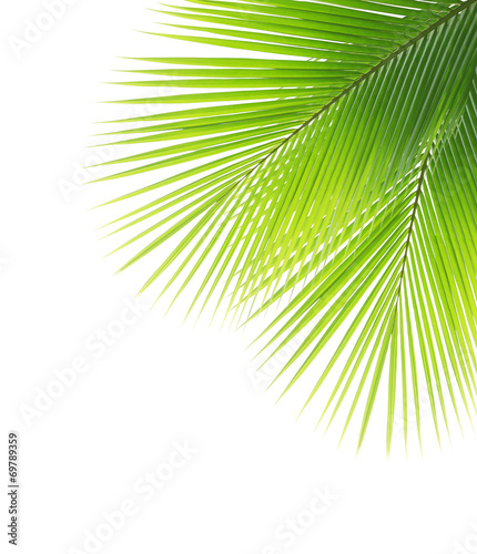 Staande foto Palm boom Green coconut leaf frame isolated on white background