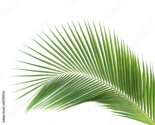 Aluminium Palm boom Green coconut leaf isolated