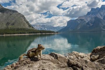 chipmunk on a rock by a mountain lake