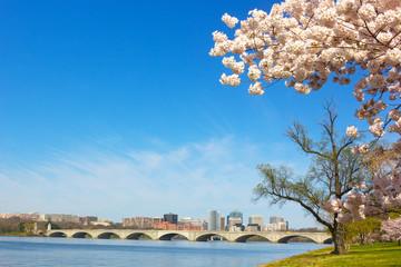 Cherry blossom near Potomac River in Washington DC.