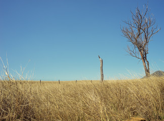 Blue Sky Horizon