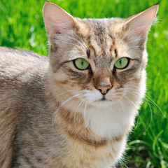 cat on a background of a green grass