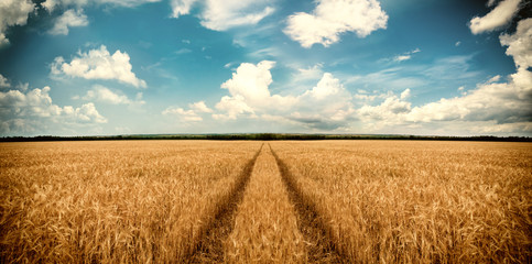 Road through wheat field