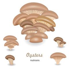 Edible mushroom oysters