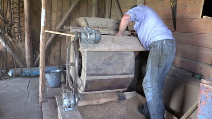 farmer processed grain with old hand cleansing harp in barn
