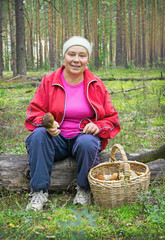Woman collect mushrooms in a pine forest