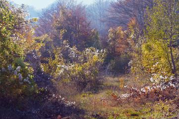 Mellow autumn, leaf fall. Montenegro
