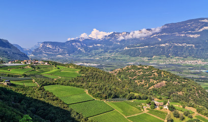 wineyards in Adige Valley