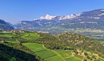 wineyards in Adige Valley