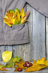 Autumn clothing with leaves on wooden boards abstract concept