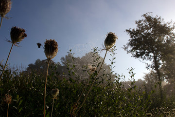 Spinnennetz bei Morgentau