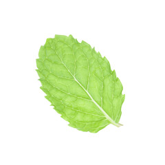 Fresh mint leaves isolated with clipping path.