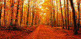 Way to forest in autumn