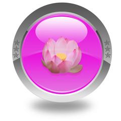 fleur rose de lotus sur bouton rose