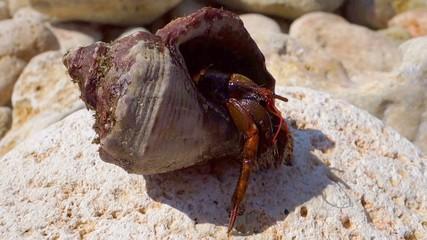 hermit crab on stones
