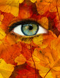 canvas print picture - Autumn eye