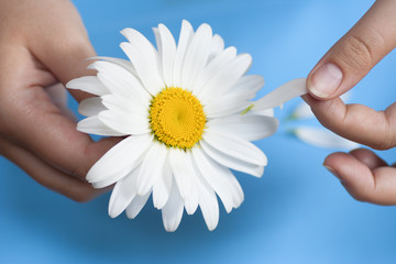 Young girl with a white daisy tearing petals off
