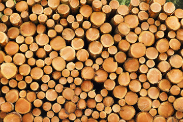 Stapel aus Holzstämmen