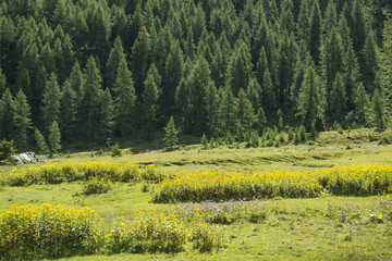 Meadow and forest in the mountain