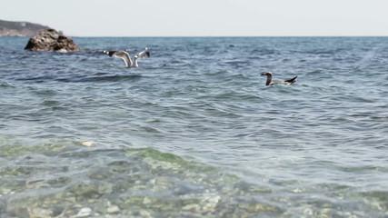 Seagull on sea water