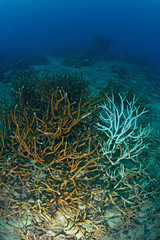 Bleached coral on a coral reef