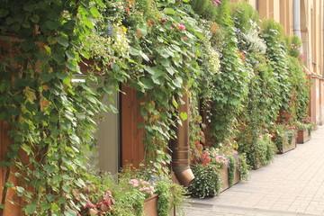 фасад в зелени