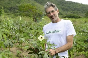 Organic farmer in okra plantation