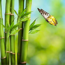Papillon avec Bamboo