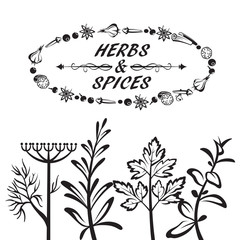 set of different herbs and spices