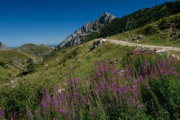 Ligurian Alps