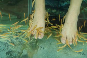 Fish Spa Skin Therapy