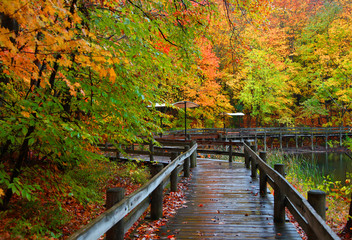 Wet board walk in autumn time