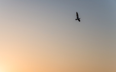 A seagull fly on the sky during sunset as silhouette picture