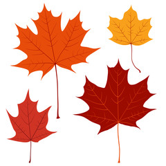 Set of vector maple leaves for your design