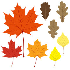 Set of eight vector leaves for your design
