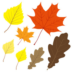 Set of seven vector leaves for your design
