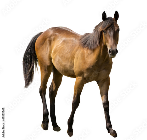 Foto op Canvas Paarden Horse Isolated